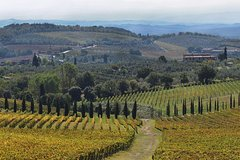 Half-Day Private Chianti Wine Tasting Tour from Siena Winter Season