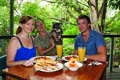 Breakfast with the Koalas at Hartley's Crocodile Adventures from Palm Cove