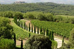 Private Half-Day Tour of Montalcino and Crete Senesi from Siena Winter Season