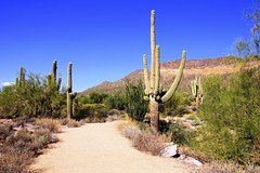 Salir de la ciudad,Actividades,Excursiones de un día,Actividades de aventura,Adrenalina,Excursión a desierto de Sonora