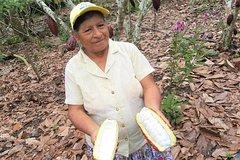 Imagen Viaje de ida desde Guayaquil a Cuenca, Ecuador, al parque Cajas y a una granja de cacao