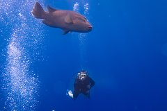 Hurghada Red Sea and Sinai SSI Deep Diving 108808P36