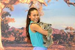 Kuranda Koala Gardens