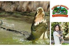 City tours,City tours,Excursions,Bus tours,Full-day tours,Full-day excursions,Hartley's Crocodile Adventure