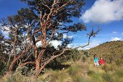 Imagen Excursión de senderismo por el bosque nuboso y el parque nacional Cajas desde Cuenca, Ecuador