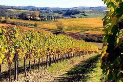Chianti wine tasting and visit to Castellina & Greve, in Tuscany from Florence