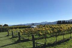 Imagen Marlborough Vineyard Discoverer