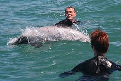 Imagen Akaroa Dolphin Swimming and Alpaca Farm Day Tour from Christchurch