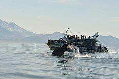 Imagen Kaikoura Whale Watch Day Tour from Christchurch