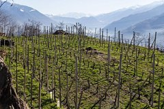 Private Valtellina Wine Route tour