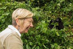 5 Days Gorilla Tracking Uganda  1495 Usd pp