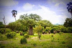 1-Day Ruaha National Park