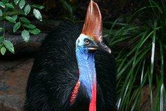 Daintree Rainforest Zipline and Wildlife Habitat Day Trip