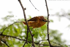 Imagen Birdwatching Tour in Tamarindo Tropical Forest area from Cuenca