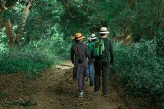 Imagen Día completo de bosques, cacao y tradiciones desde Guayaquil.