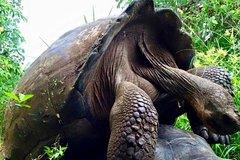 Imagen 6 Day Galápagos Islands Land Tour