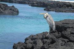 Imagen 4- Day Santa Cruz Galapagos Island Hopping Express