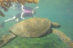 Imagen 6- Day Santa Cruz, Isabela & Uninhabited Galapagos Island Hopping Express