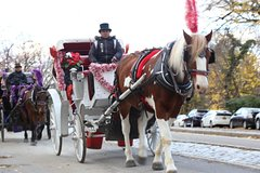 Royal Horse Carriage Tour in Central Park