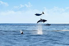 Imagen Bay of Islands & Cape Reinga Flexible Travel Pass  - Auckland return