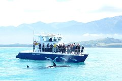 3-Day Auckland to Bay of Islands Return Tour