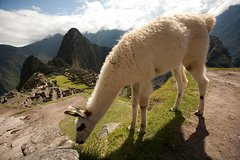 Imagen 6-Day Experience in Cusco, Sacred Valley and Machu Picchu