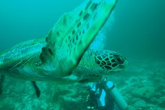 Imagen 8-Days All Inclusive Galapagos Island Hopping