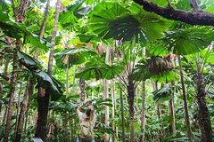 2-Day Cape Tribulation and Daintree Rainforest Tour from Cairns /Port Douglas