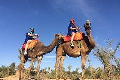 Actividades,Actividades de aventura,Salidas a la naturaleza,Palmeral de Marrakech,Paseo en camello