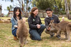 Imagen Bonorong Wildlife Park and Richmond Afternoon Tour from Hobart