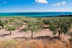 4-days Puglia Harvest and Wine Tour