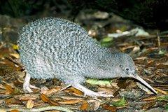 Imagen Overnight Kiwi Spotting Tour on Kapiti Island