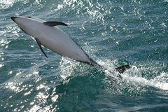 Imagen Kaikoura Whale and Dolphin Overnight Tour from Christchurch