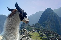 Imagen 15-Day Tour from Lima: Sacred Valley and Titicaca with Inca Trail Trek