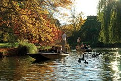 Imagen Punting on the Avon River with Optional Christchurch Gondola and Botanic Gardens Tour