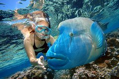 Excursions,Multi-day excursions,Excursion to Great Barrier Reef,Excursion to Kuranda