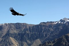 Imagen Colca Canyon 2D1N Group Service