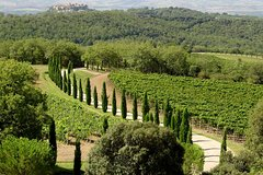 Full-Day Brunello Wine Tour
