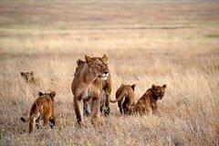 3 Days Tanzania Camping safaris