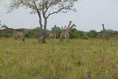 7 Days 6 NightsTanga Saadani National ParkEast and West Usambara Mountains