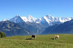 City tours,Tours with private guide,Specials,Excursion to Jungfraujoch,Lucerne Tour