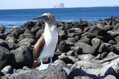 Imagen 8 Days Galapagos Island Hopping Expedition (comfort class)