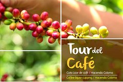 Imagen Full-Day Tour: Coffee Plantation -Hacienda Coloma- from Bogota
