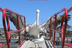 Albany Wildlife and Scenic Cruise