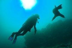Imagen 6-Day Galapagos PADI Diving Course