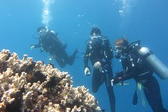 Reef Trip - Certified Diving