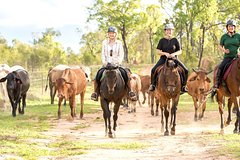 Ride the Outback at Ironbark House Dimbulah Horse Riding