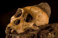 Cradle of humankind and maropeng tour