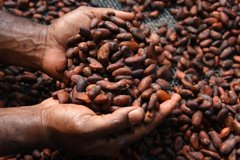 Aelan Chocolate Factory Tour - Port Villa Vanuatu