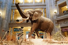 Private Guided Tour: Smithsonian National Museum of Natural History
